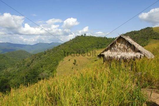 Paddy with straw hut in mountain landscape, near Saenyang Ban, District Muang Khoua, Phongsali province, Laos, Southeast Asia, Asia