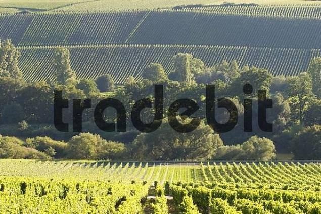 vineyards Mainschleife - Franconia - Germany