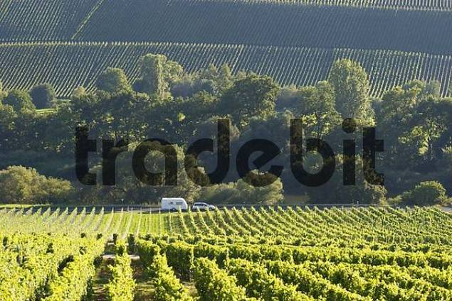 automobile caravan driving through vineyards Mainschleife - Franconia - Germany