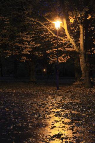 Autumn leaves on the wet asphalt, Oehringer Hofgarten, court garden, Oehringen, Hohenlohe, Baden-Wuerttemberg, Germany, Europe