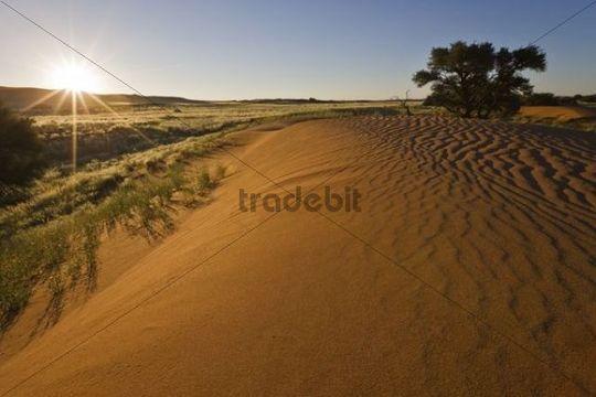 Dune on the edge of the Namib desert, Namibia, Africa