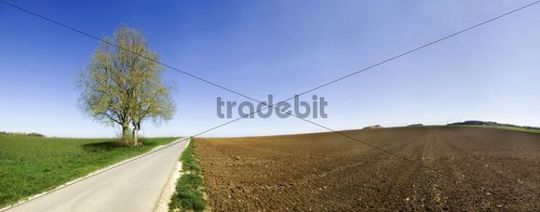 Road passing two linden trees and a wayside cross between a field and a meadow near Erkertshofen, Eichstaett district, Bavaria, Germany, Europe