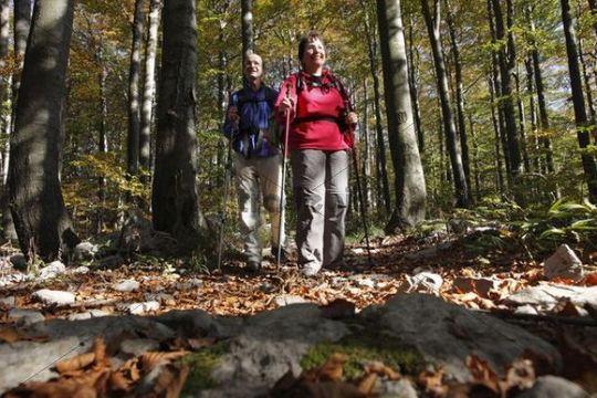 Hikers on forest trail, Risnjak National Park, Gorski Kotar region, Croatia, Europe