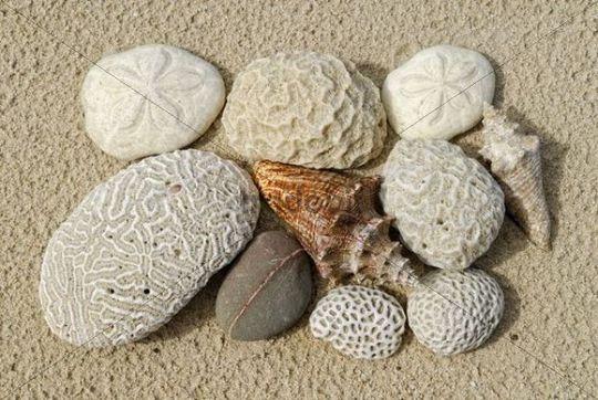 Beach finds, corals, sea sheels, sea urchins shells and stone, St. Croix island, U.S. Virgin Islands, United States