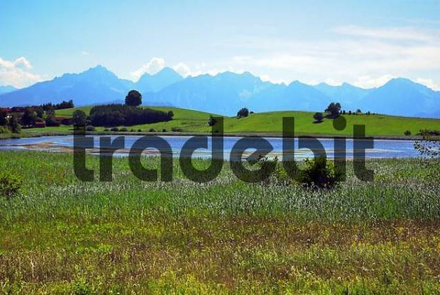 landscape with moor pond, Allgäu, Bavaria, Germany, Europe