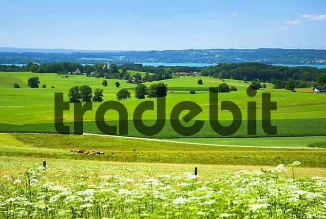 cultivated landscape in Upper Bavaria, Bavaria, Germany, Europe