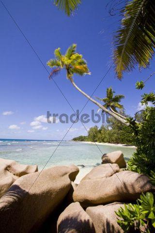 Coconut palm trees (Cocos nucifera) and granite rocks, island of La Digue, Seychelles, Africa, Indian Ocean