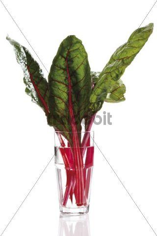 Chard (Beta vulgaris)