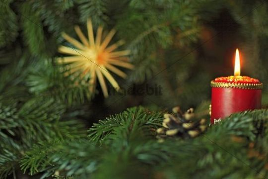 Advent candle, fir branches, star, cone