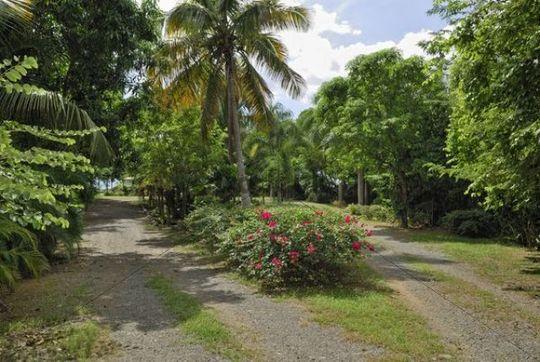 Fork in the road, island of St. Croix, U.S. Virgin Islands, USA