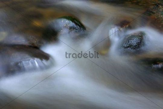 Kleine Ohe mountain brook, close-up with flowing movement, Nationalpark Bayrischer Wald national park, Bavaria, Germany, Europe
