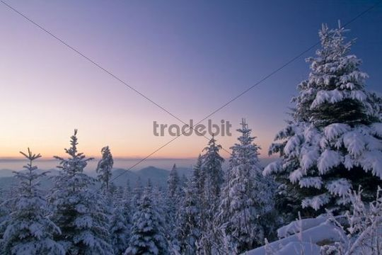 Evening view from Mt. Teufelsmuehle towards Mt. Merkur, Black Forest, Baden-Wuerttemberg, Germany, Europe