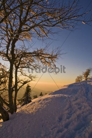 Evening light on Mt. Belchen in the southern Black Forest, Black Forest, Baden-Wuerttemberg, Germany, Europe