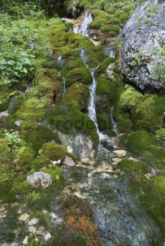 Small moss-covered tributary of the Johannesfluss River in Johannestal Valley, in the Karwendel Range, Tyrol, Austria, Europe