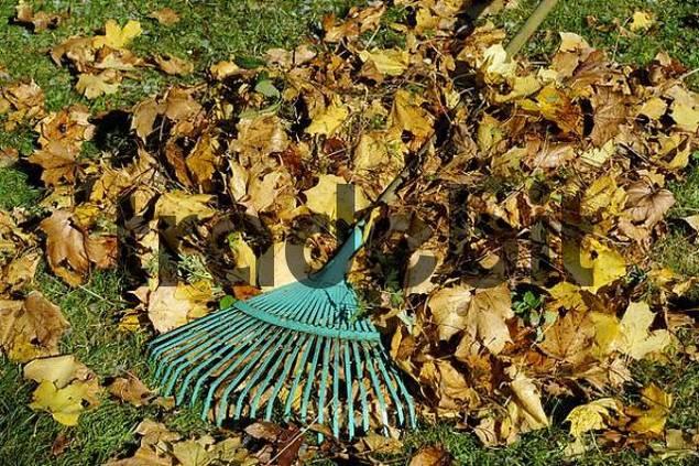 autumn foliage and rake, gardening in autumn