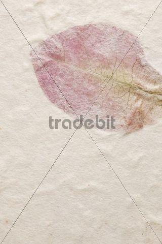 Wallpaper, leaf motif
