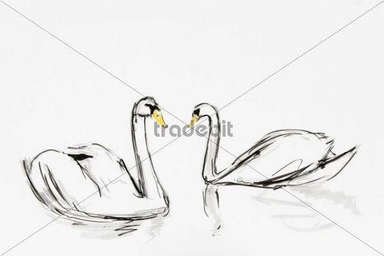 Two swans, drawing by artist Gerhard Kraus, Kriftel