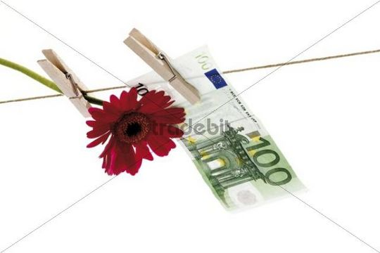 Flower with 100 Euro note on a clothesline, symbolic image for fake money, counterfeit