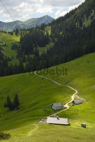 Stepbergalm mountain pasture, 1583m, meadow, near Garmisch-Partenkirchen, Werdenfelser Land area, Upper Bavaria, Bavaria, Germany, Europe
