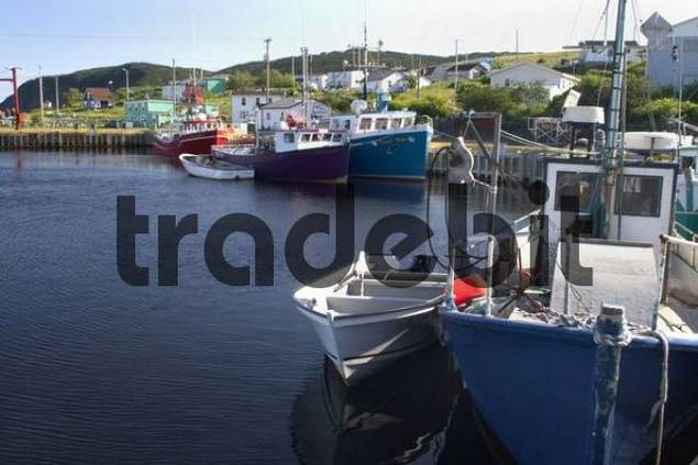 fishing boats in the harbor of Branch, Avalon Peninsula