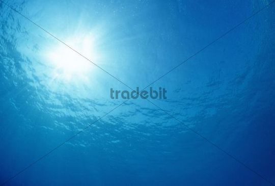 View to the surface, Bonaire, Netherlands Antilles, Caribbean