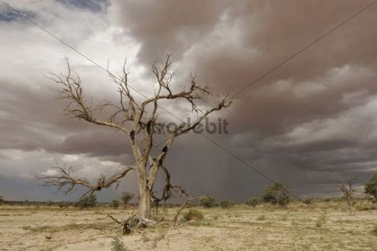 Desert landscape with stormy atmosphere, Kalahari desert, South Africa
