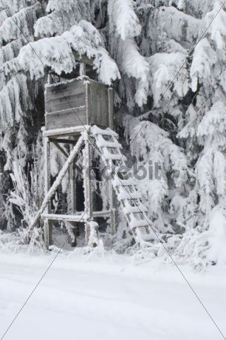 Tree stand in snow and frost, Allgaeu, Bavaria, Germany, Europe