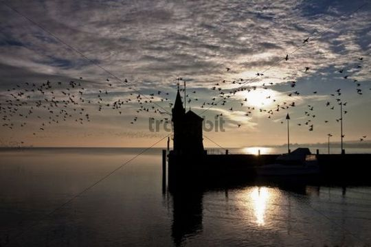Harbor entrance of Constance with startled flock of birds, looking towards the Obersee part of the lake, sunrise, Konstanz, Baden-Wuerttemberg, Germany, Europe