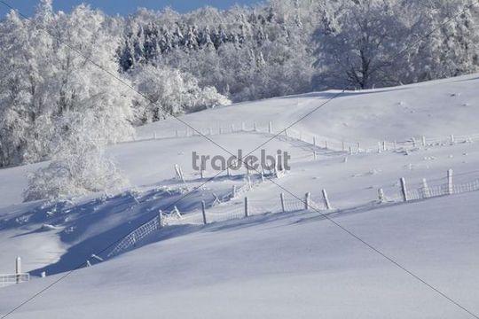 Snowy landscape in winter, Canada