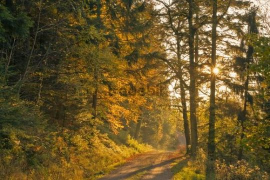 Autumnal path on Mt. Mayenberg in Bad Herrenalb, Black Forest, bathen-Wuerttemberg, Germany, Europe