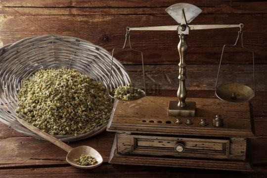 Antique scales weighing Chamomile (Matricaria chamomilla) on a wooden surface
