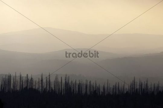 Hill in backlight on Mt. Lusen, Nationalpark Bayrischer Wald National Park Bavarian Forest, Bavaria, Germany, Europe