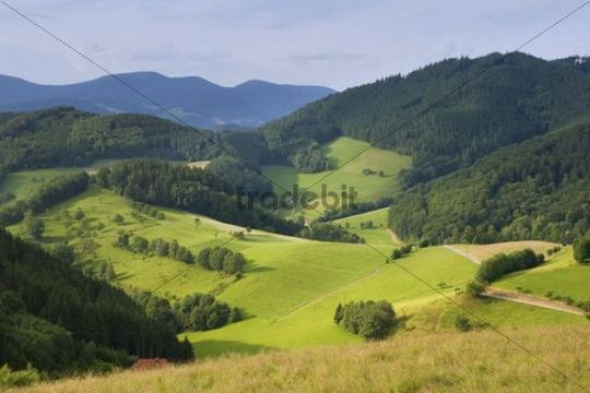 Black Forest landscape near Gutach, Black Forest, Baden-Wuerttemberg, Germany, Europe