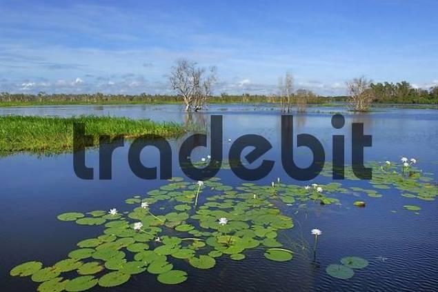 wetland. Kakadu Nationalpark, Yello Water, Northern Territory, Australia