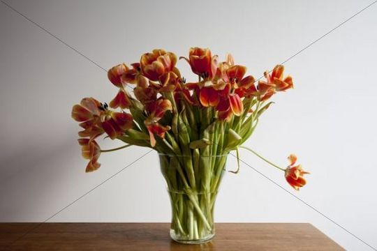 bl hende fast verbl hte tulpen runterladen natur. Black Bedroom Furniture Sets. Home Design Ideas