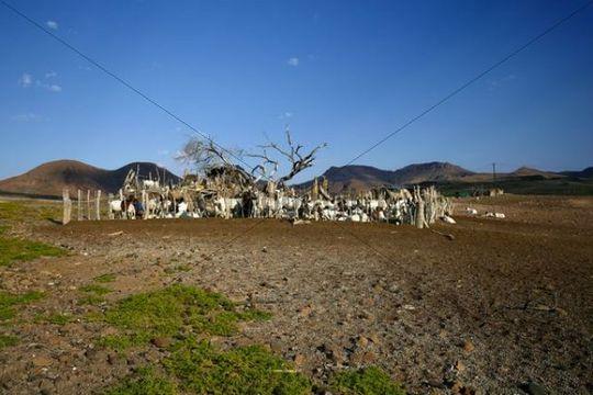 Goat pen, Damaraland, Namibia, Africa