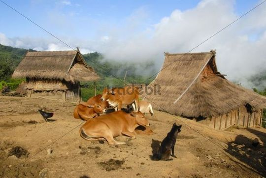 huts made of bamboo and straw  akha nuqui ethnic group