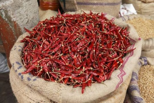 Bag filled with chili peppers, Devaraja Market, Mysore, Karnataka, South India, India, South Asia, Asia