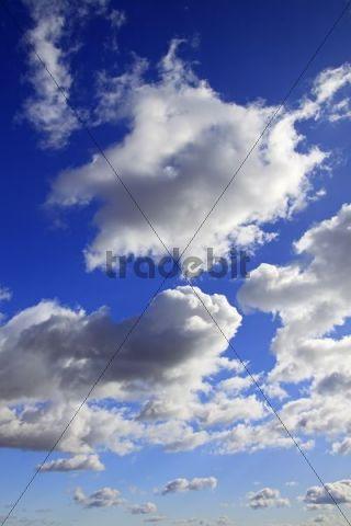 White clouds and blue sky, Naturschutzgebiet Oberalsterniederung nature reserve, Schleswig-Holstein, Germany, Europe