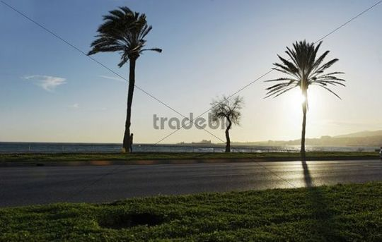 Evening atmosphere, sea, promenade, Avinguda de Gabriel Roca, Palma de Mallorca, Majorca, Balearic Islands, Spain, Europe