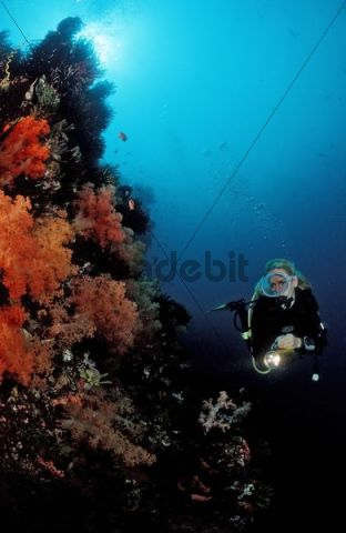 Diver at coral reef, Komodo, Indo-Pacific, Indonesia, Southeast Asia