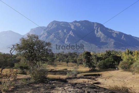 Landscape in the dry season in Mudumalai National Park, Nilgiri Hills, Tamil Nadu, Tamilnadu, South India, India, South Asia, Asia