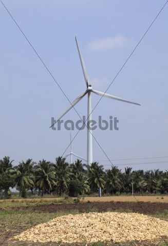 Wind farm, windturbine and corn near Udumalaipettai, Tamil Nadu, Tamilnadu, South India, India, South Asia, Asia