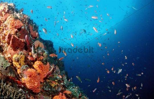 Coral reef, Komodo, Flores Sea, Indonesia