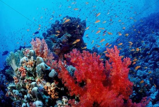 Colorful coral reef, Hurghada, Red Sea, Egypt