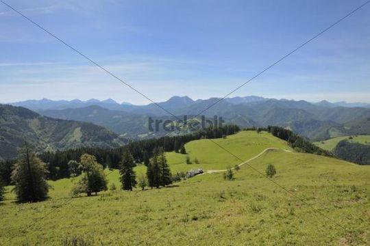 Gschwendtalm alpine pasture, Grossraming, Upper Austria, Austria, Europe