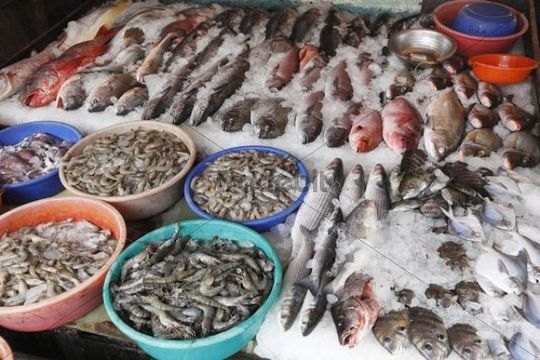 Fish and tiger prawns king prawns fish market kochi for King fish market