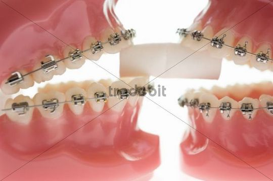 Two models of teeth biting on a cotton pad in a dentist´s office, Germany, Europe