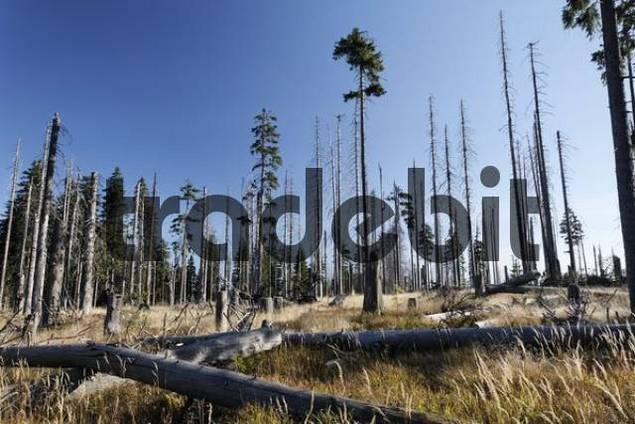 deceasing forest at mountain Dreisesselberg in Bavarian Forest, Lower Bavaria, Germany, borderline Czech Republic