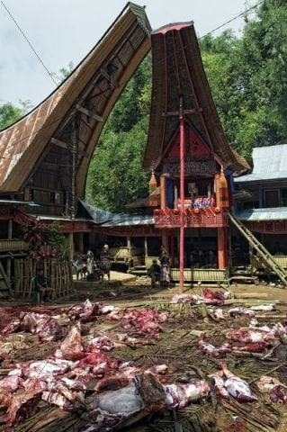 Funeral ceremony with ritual slaughter of water buffaloes in traditional Toraja village, Batutumonga, near Rantepao, Sulawesi, Indonesia, Southeast Asia